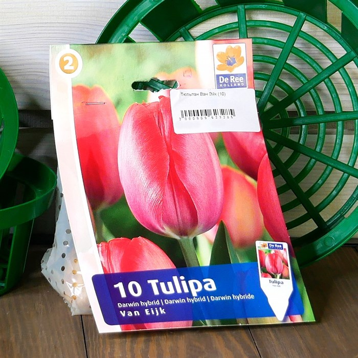 Тюльпан Ван Эйк (10) - фото 61084