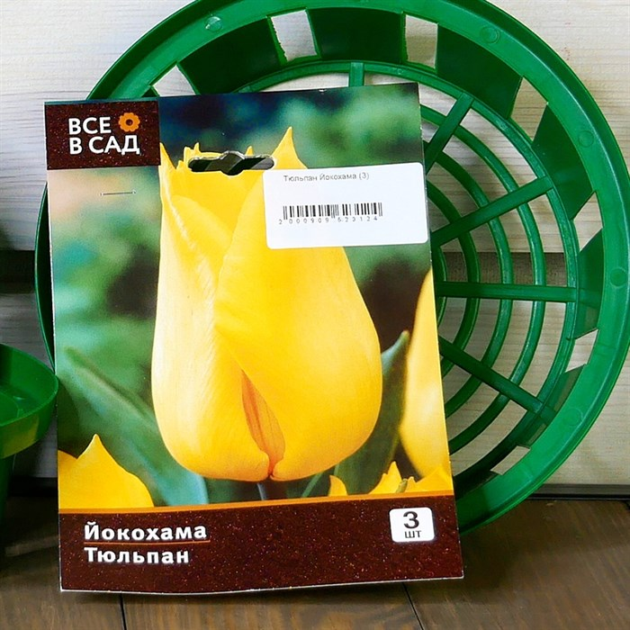 Тюльпан Йокохама (3) - фото 61088