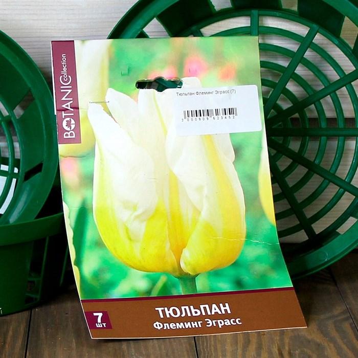 Тюльпан Флеминг Эграсс (7) - фото 61097