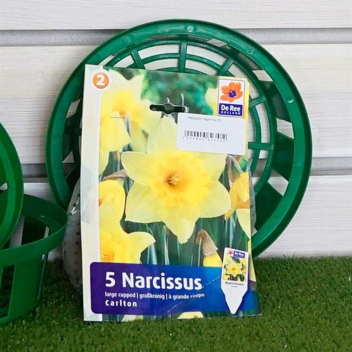Нарцисс Карлтон (5) - фото 61329
