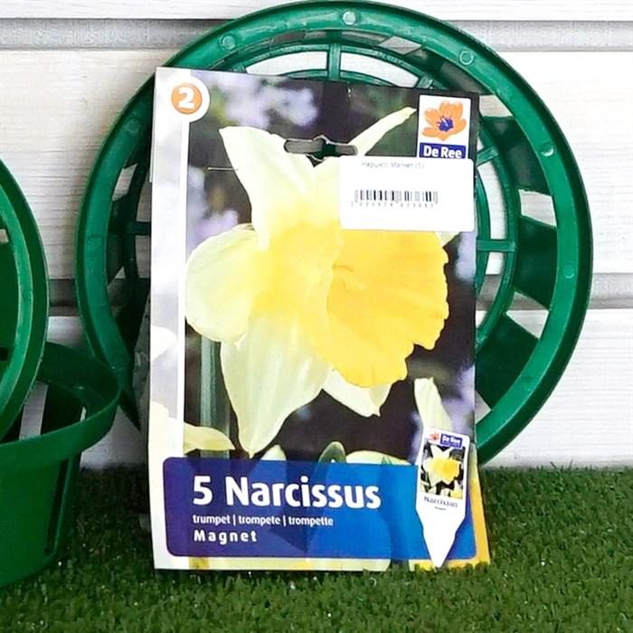 Нарцисс Магнет (5) - фото 61348