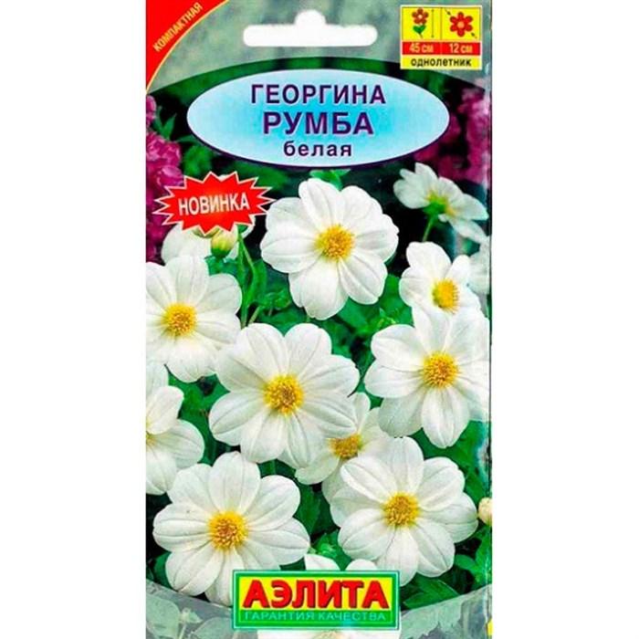 Георгина Румба белая - фото 71757