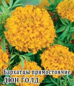 Бархатцы пр. Дюн Голд
