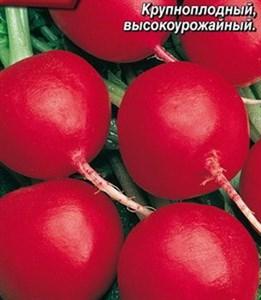 Редис Дуро Краснодарское