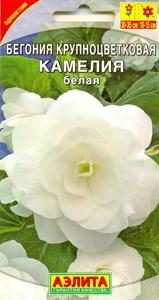 Бегония крупноцветковая Камелия белая