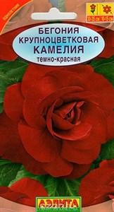 Бегония Камелия темно-красная