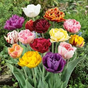 Тюльпан Махровый ранний микс(10)