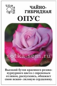 Роза Опус