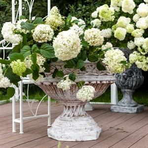 Вазон для цветов (аренда)