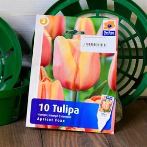 Тюльпан Эприкот Фокс (10) - фото 61069
