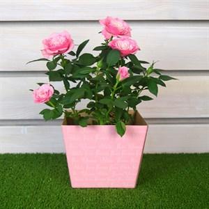 Коробка для цветов 11,8*15,4*12,5
