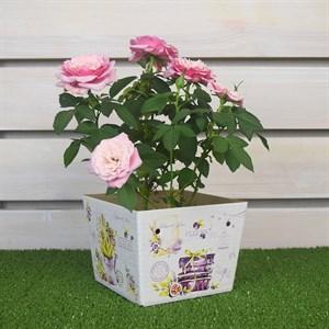 Плайм пакет для цветов 110*150/125 Прованс 1