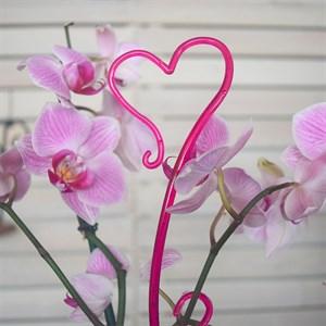 Держатель для орхидей Сердце Н-55см