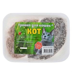 Травка КОТ для кошек на подложке