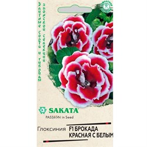 Глоксиния Брокада красная с белым 5шт - фото 67268