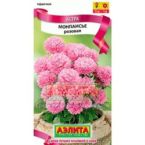 Астра Монпасье розовая