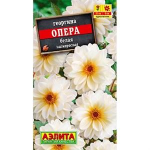 Георгина Опера белая