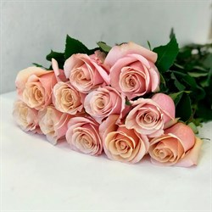 Роза Секрет Гарден - фото 74385