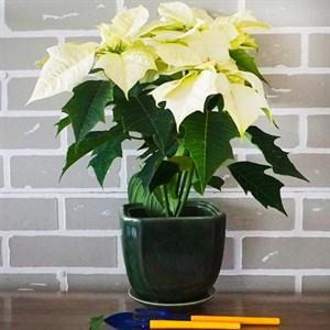 Горшки для цветов ЖАСМИН №2