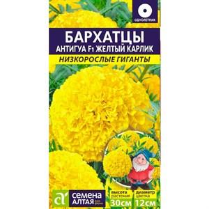 Бархатцы Антигуа желтый карлик 5шт