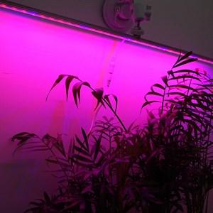 Фитосветильник Цветущий подоконник 7 Вт