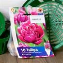 Тюльпан Маргарита (10) - фото 61090