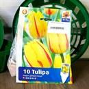 Тюльпан Фламенко (10) - фото 61095