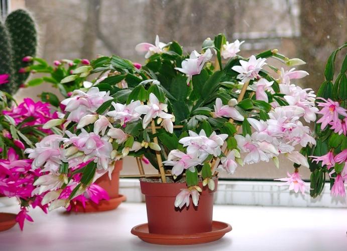 Купить домашние цветы в пензе купить тюльпаны стерлитамак