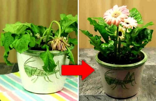 Как поливать цветы – обильно, после засухи