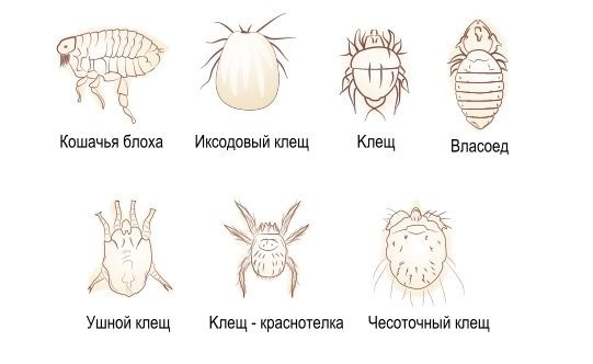 от паразитов препараты для профилактики детям