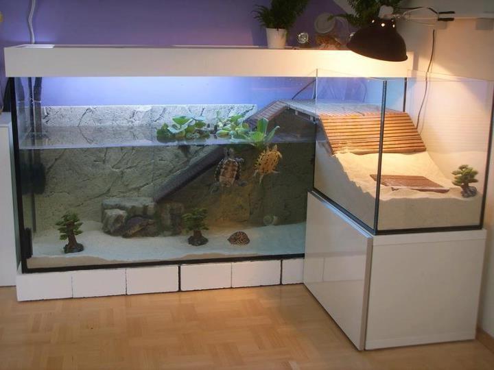 Как обустроить акватеррариум для водных черепах - Черепахи 32