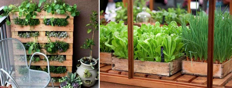 Что вырастить на балконе. купить семена овощей в пензе.